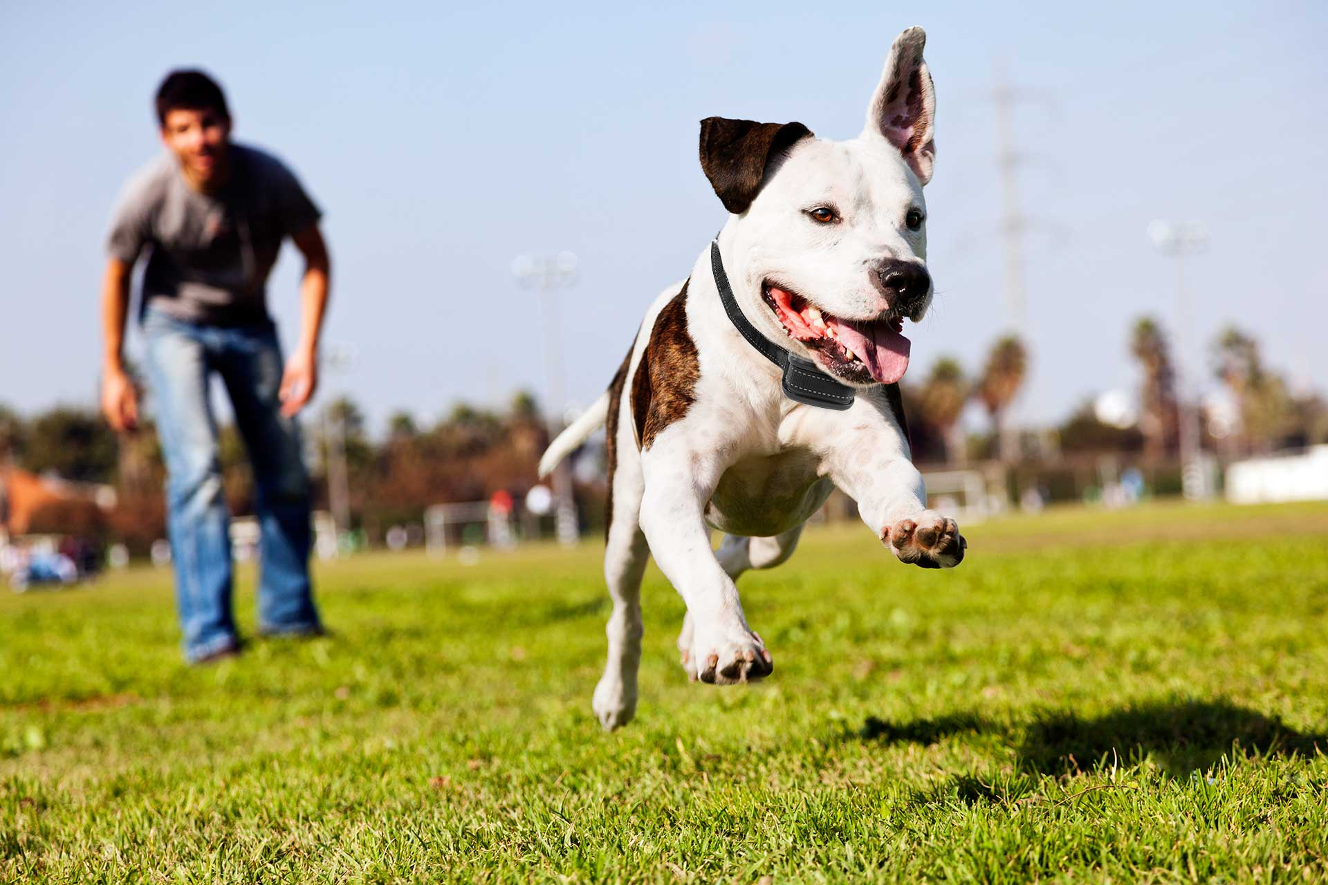 גידול גור כלבים
